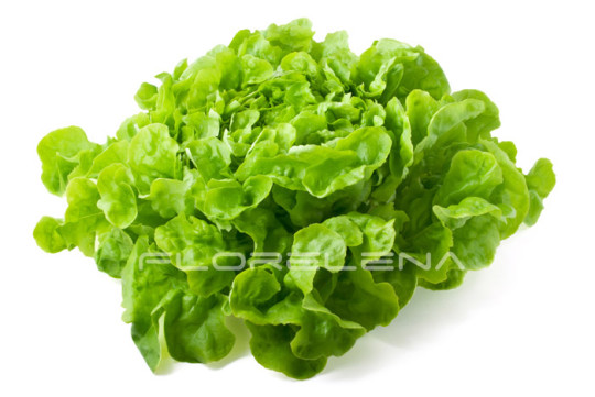 Close-up of fresh butterhead lettuce isolated on white