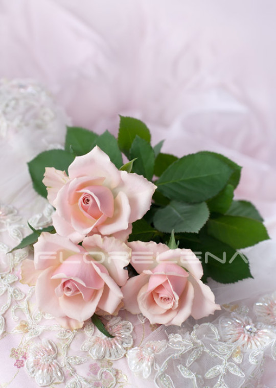 Three pink roses on wedding lace